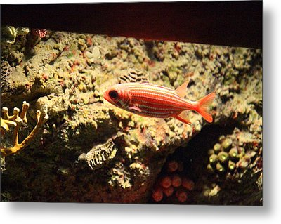 Fish - National Aquarium In Baltimore Md - 1212118 Metal Print by DC Photographer