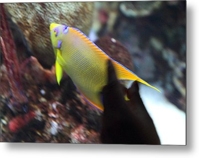 Fish - National Aquarium In Baltimore Md - 121272 Metal Print by DC Photographer