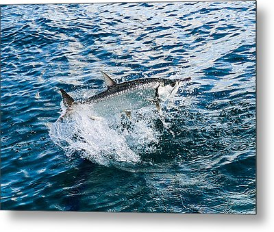 Fish Out Of Water Metal Print by  Michael Glenn
