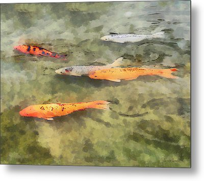 Fish - School Of Koi Metal Print by Susan Savad