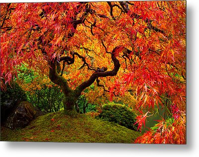 Flaming Maple Metal Print by Darren  White