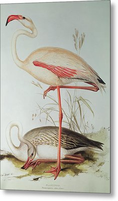 Flamingo Metal Print by Edward Lear