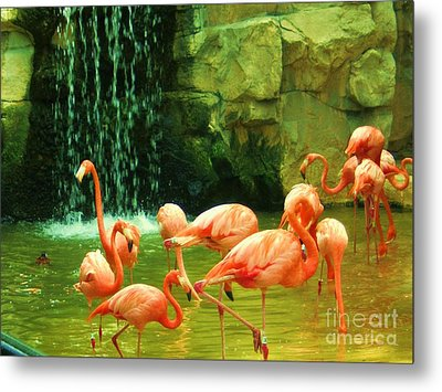 Flamingo Metal Print by Esther Rowden