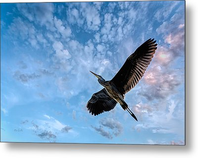 Flight Of The Heron Metal Print by Bob Orsillo