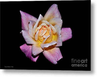 Floribunda Rose In Full Bloom Metal Print by Susan Wiedmann