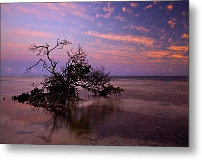 Florida Mangrove Sunset Metal Print by Mike  Dawson
