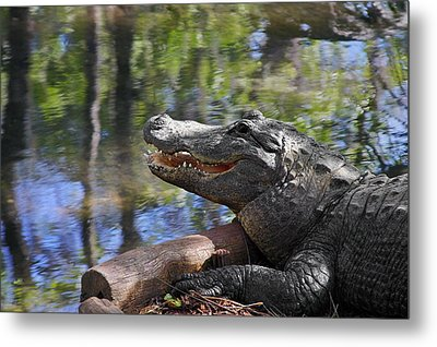 Florida - Where The Alligator Smiles Metal Print by Christine Till
