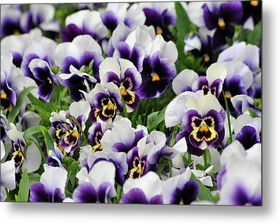 Flower Faces Metal Print by Frederico Borges