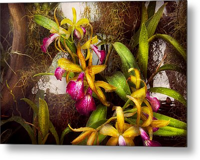 Flower - Orchid - Cattleya - There's Something About Orchids  Metal Print by Mike Savad