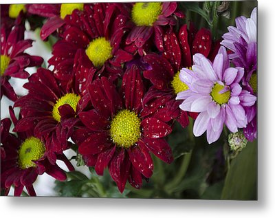 Flowers Metal Print by Ahmed Tarek Shaffik