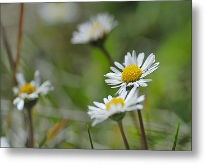 Flowers At The Mountains Metal Print by Guido Montanes Castillo