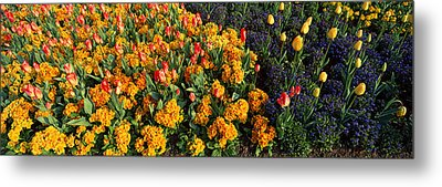 Flowers In Hyde Park, City Metal Print by Panoramic Images