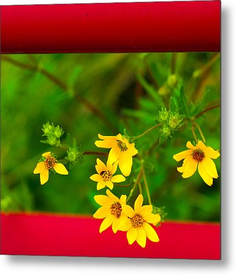 Flowers In Red Fence Metal Print by Darryl Dalton