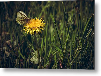 Fluttered By Metal Print by Chris Fletcher