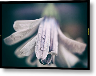 Fluttering Heart Metal Print by Laurie Search