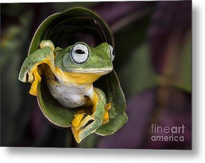 Flying Tree Frog Metal Print by Linda D Lester
