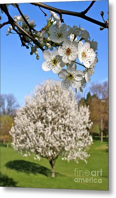 Focus On Spring Metal Print by Jay Nodianos