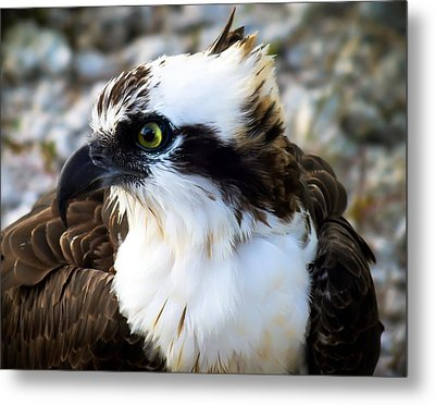 Focused Metal Print by Karen Wiles