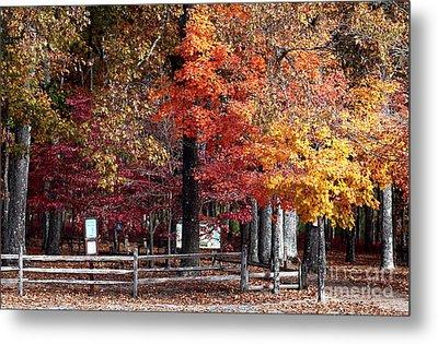 Foliage Colors Metal Print by John Rizzuto