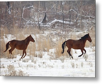 Follow The Leader Metal Print by Mike  Dawson