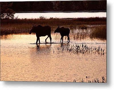 Following Mom Metal Print by Brent L Ander