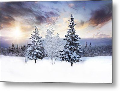 For The Love Of Winter Metal Print by Amber Fite