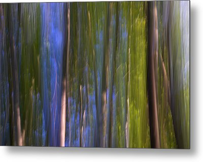 Forest Dreams Metal Print by Guido Montanes Castillo