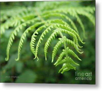 Forest Fern Metal Print by Lainie Wrightson