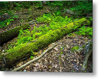 Forest Floor Gosnell Big Woods Metal Print by Tim Buisman