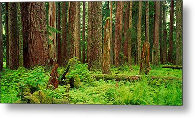 Forest Floor Olympic National Park Wa Metal Print by Panoramic Images