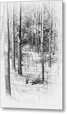 Forest In Winter Metal Print by Tom Mc Nemar