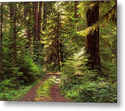 Forest Path 4 Metal Print by Leland D Howard