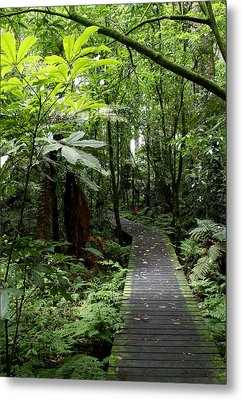 Forest Path Metal Print by Les Cunliffe