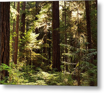 Forest Sunlight Metal Print by Leland D Howard