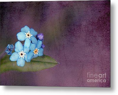 Forget Me Not 02 - S0304bt02b Metal Print by Variance Collections