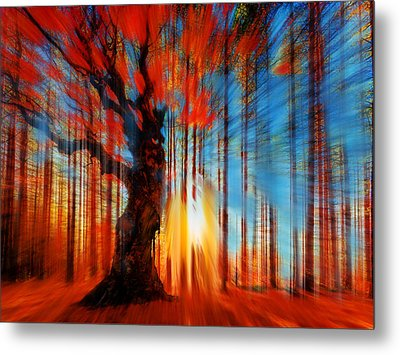 Forrest And Light Metal Print by Tony Rubino
