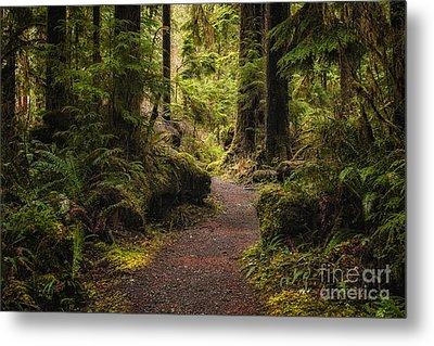 Forest Walk  Metal Print by Jennifer Magallon