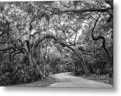 Fort Clinch Live Oaks Metal Print by Dawna  Moore Photography