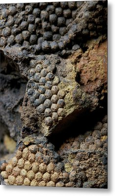 Fossil Algae Metal Print by Sinclair Stammers