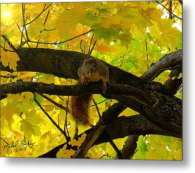 Fox Squirrel  Metal Print by Michael Rucker