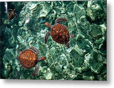 Fragile Underwater World. Sea Turtles In A Crystal Water. Maldives Metal Print by Jenny Rainbow