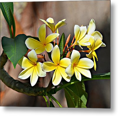 Fransy Pansy 6 Metal Print by Scott Parker