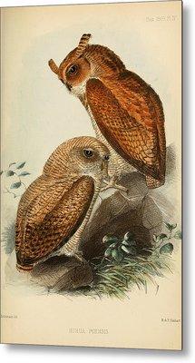 Fraser's Eagle Owl Metal Print by J G Keulemans