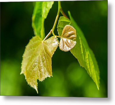 Fresh - Featured 3 Metal Print by Alexander Senin