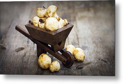 Fresh Muschrooms In A Miniature Wheelbarrow Metal Print by Aged Pixel