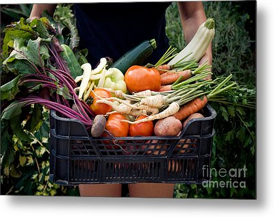 Fresh Organic Vegetables Metal Print by Viktor Pravdica