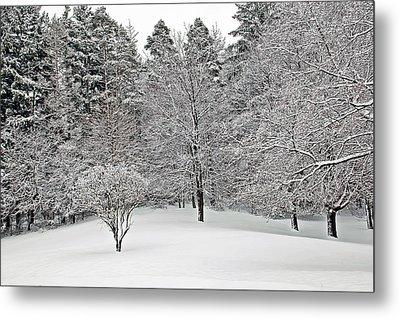 Fresh Snow Scene Metal Print by Aimee L Maher Photography and Art Visit ALMGallerydotcom