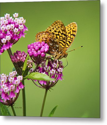 Fritillary Butterfly Square Format Metal Print by Christina Rollo