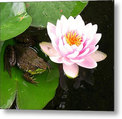 Frog And Lily Metal Print by Debbie Finley