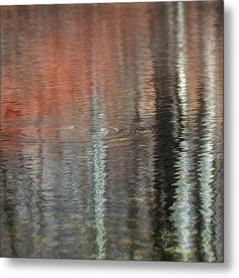Frog In Paradise Square Metal Print by Bill Wakeley